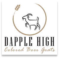Dapple High Colored Boer Goats For Sale   Troy Ohio